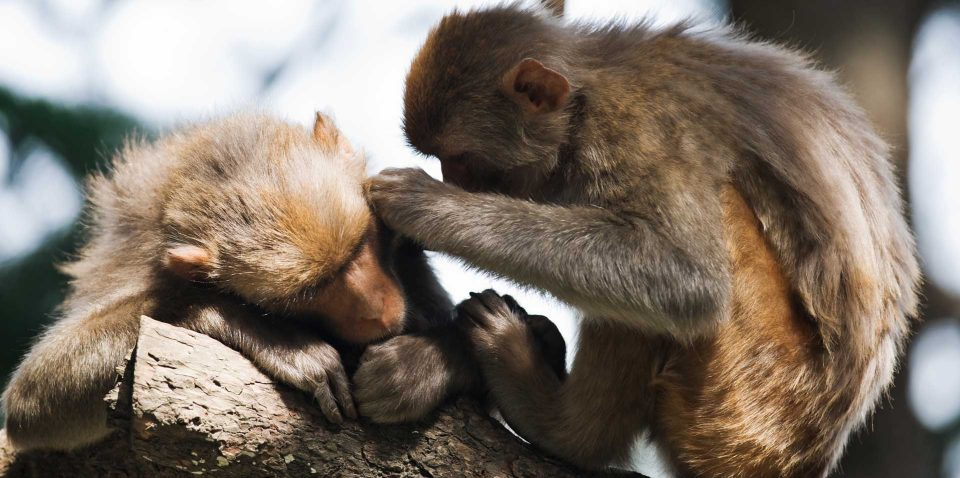 macaque-P2SPZG2-1.jpg